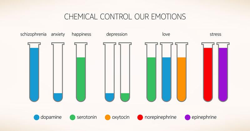 Illustrated Image Of Containers Each with 1 Element Dopamine Serotonin Oxytocin Norepinephrine Epinephrine