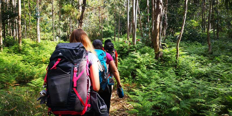People Walking In Forest With Backpacks